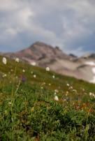 alpine-goat-rocks