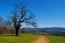 oak-vista